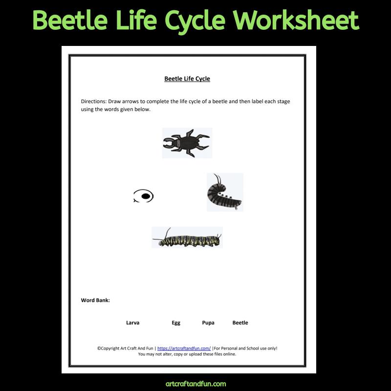 Free Printable Beetle Life Cycle Worksheet #freeprintable #freeworksheet #freeanimallifecylceworksheet #beetlelifecycleworksheet