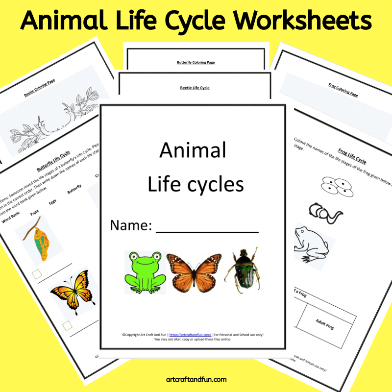 Get Free Printable Animal Life Cycle Worksheets Packet. It contains Frog Life Cycle Worksheet, Butterfly Life Cycle Worksheet and Beetle Life Cycle Worksheets along with coloring pages. #freeprintable #freeworksheets #freeanimallifecycleworksheets #animallifecycleworksheets