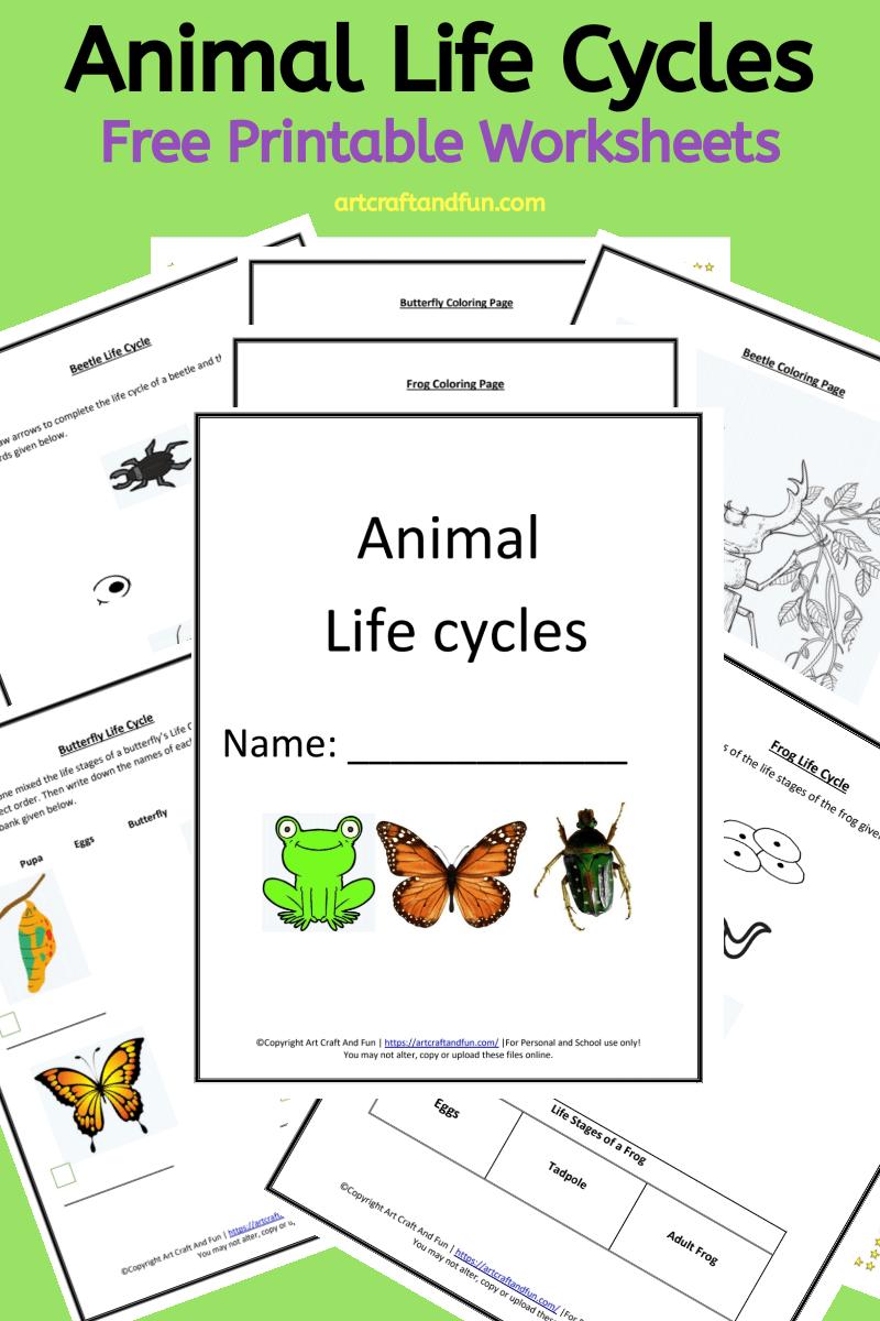 Free Printable Animal Life Cycle Worksheets