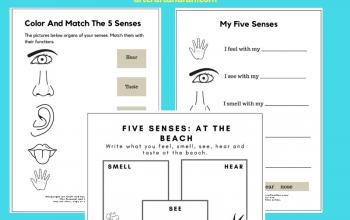 Free Printable 5 Senses Worksheet